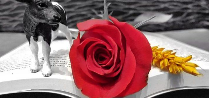 Sant Jordi,
